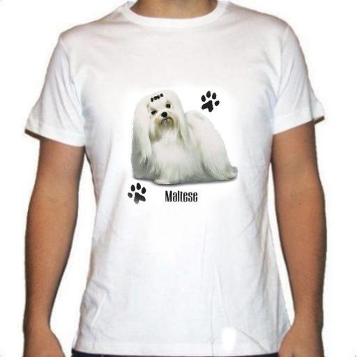 Camiseta Bichón Maltés