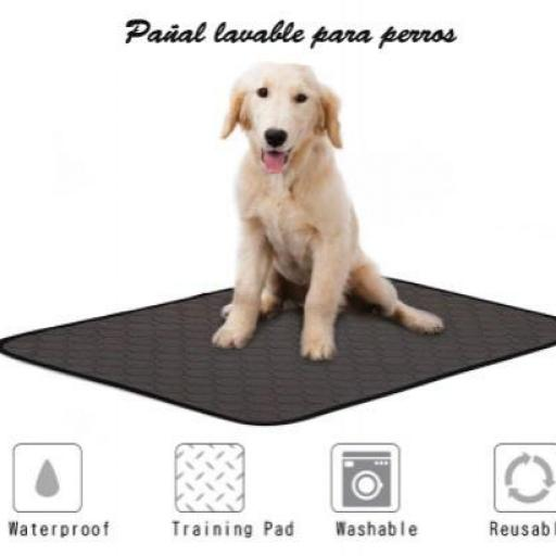Pañal lavable para perros [1]