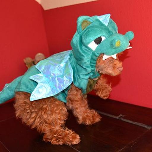 Disfraz Dinosaurio [3]