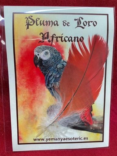 PLUMA DE LORO AFRICANO 7-9  cm.