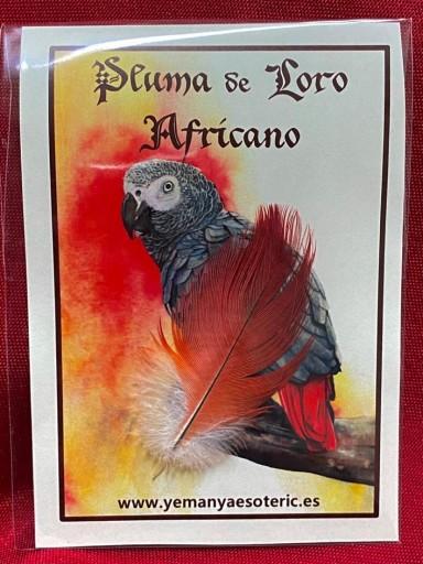 PLUMA DE LORO AFRICANO 4-6 cm.