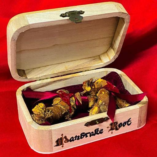 Raiz de Mandragora pareja Ritualizada en caja de madera