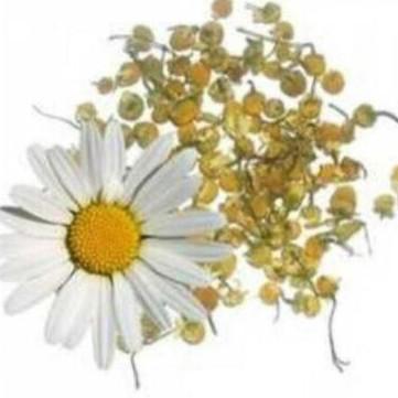 Manzanilla amarga / Manzanilla Mahon (Santolina chamaecyparissus L) 20gr.