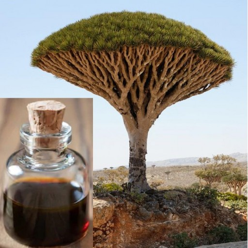 Sangre de Drago - Sangre de Grado Croton lechleri - Natural 100%