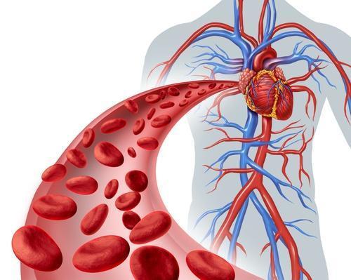 PRUEBA DE MICRO-CIRCULACIÓN SANGUINEA (corazón y cerebro)