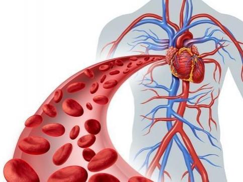 PRUEBA DE MICRO-CIRCULACIÓN SANGUINEA (corazón y cerebro) [0]