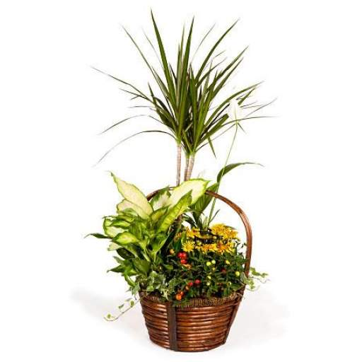 cesta de plantas [0]