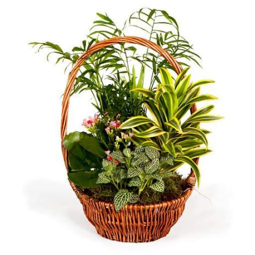 cesta planta verde