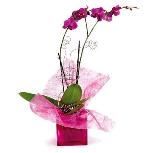 orquidea con base