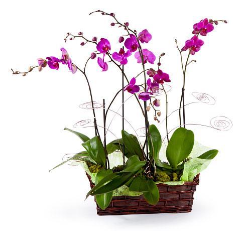 expectacular y elegante, orquideas