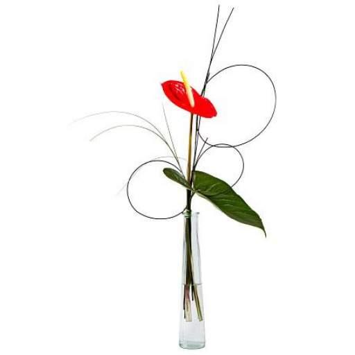 violetero con flor de anthurium