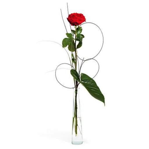 flor unica [0]