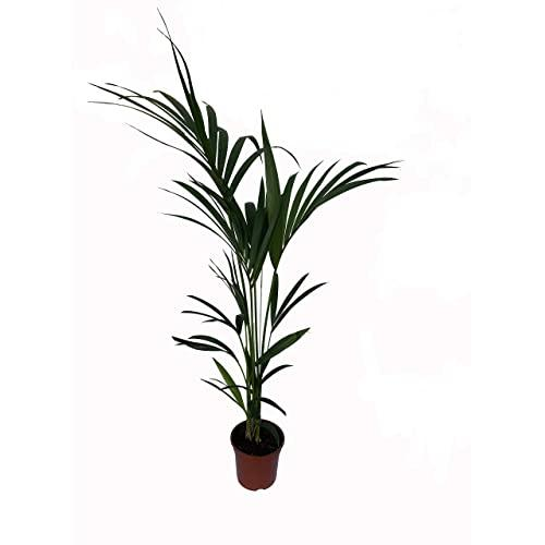 Planta interior 2