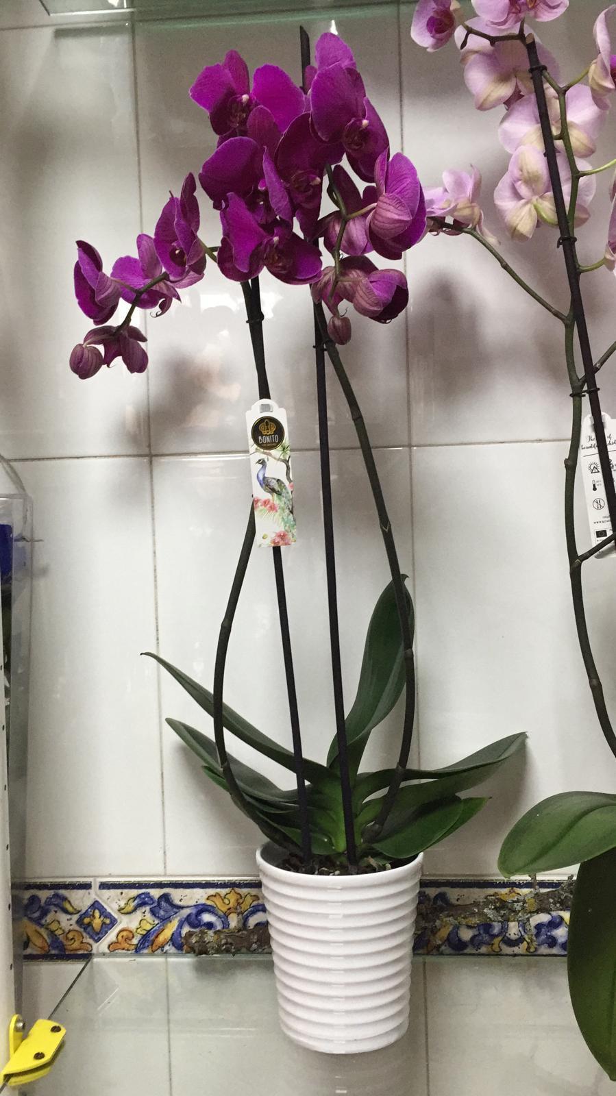 Orquideas 3