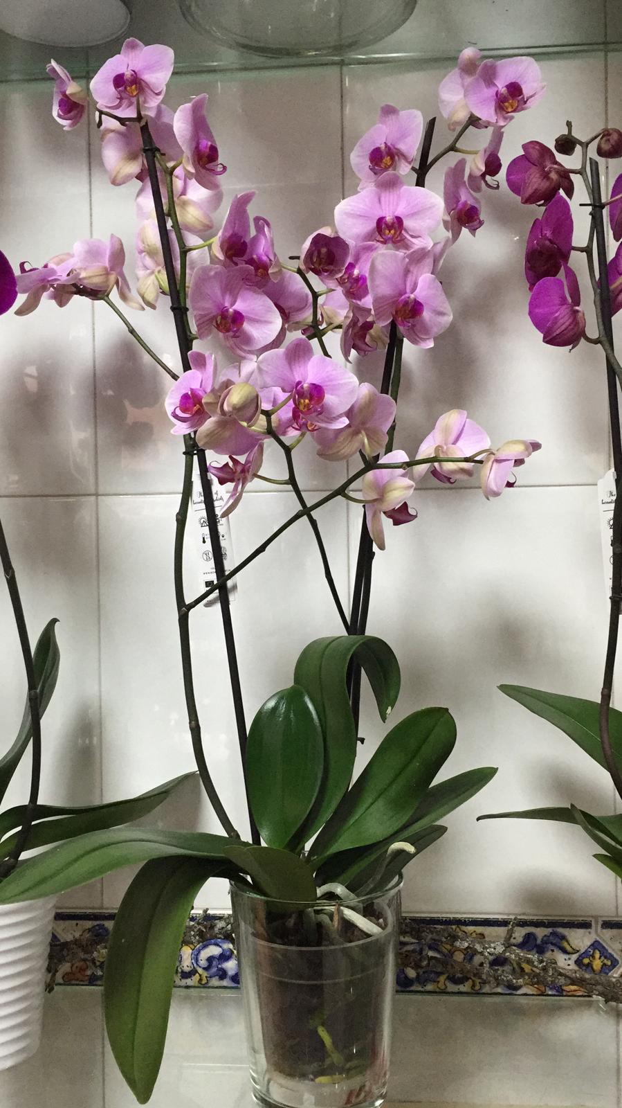Orquideas 4
