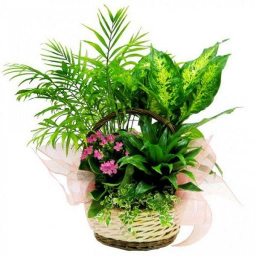 Cesta plantas 12