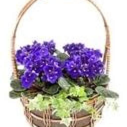 cesta  de violetas africanas