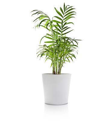 Planta interior 7