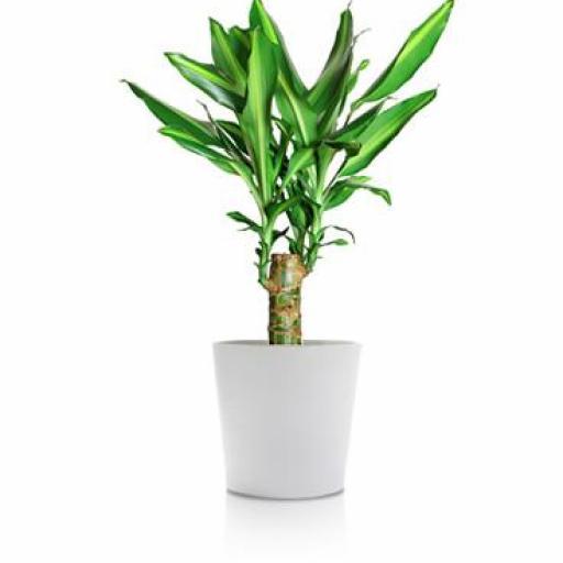 Planta interior 8
