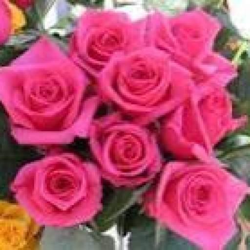 Ramo De Rosas Fusia