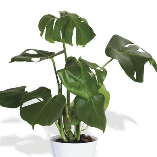 Planta interior 12