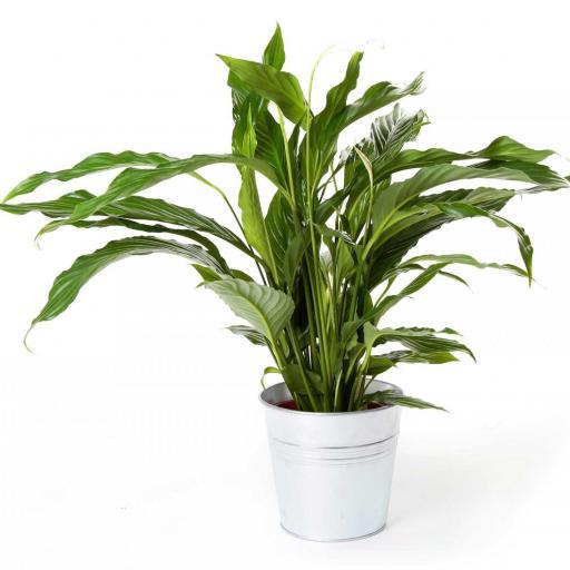 Planta interior 13