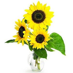 Sunflowers_Vase__1_.jpg