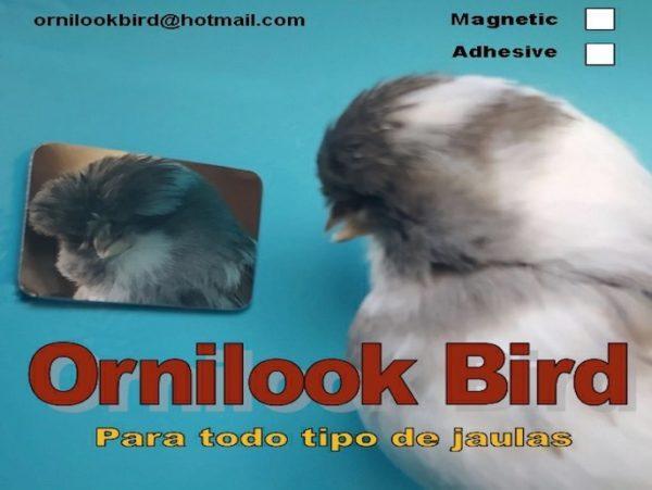 Ornilook Bird Adhesive