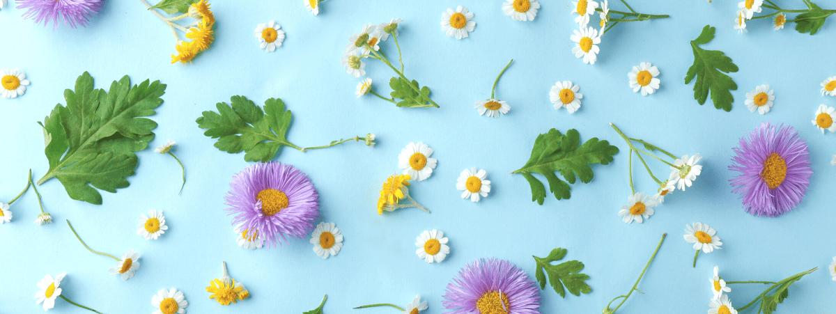 Beneficios y Propiedades de las Cremas Alpinas