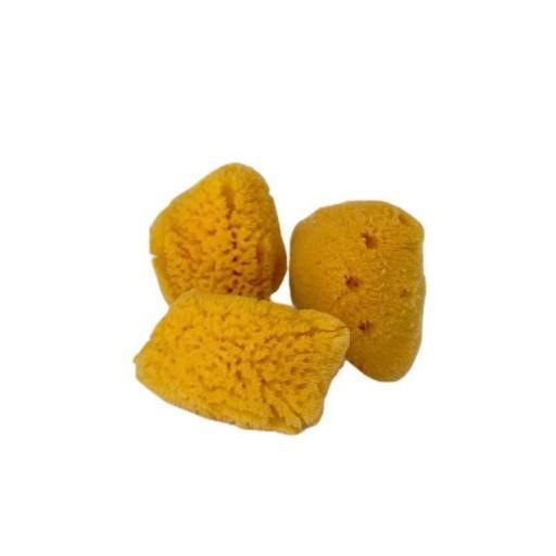 Mini esponjas marinas