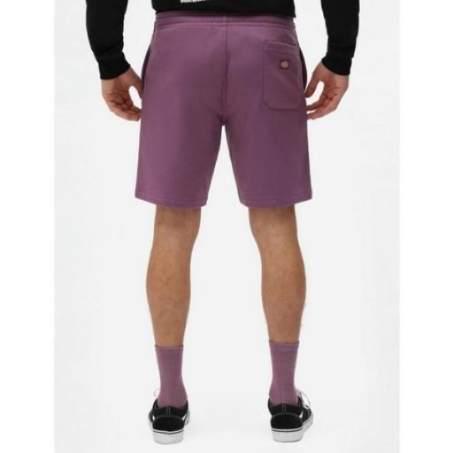DICKIES Pantalón Champlin Grey Purple Gumdrop [1]