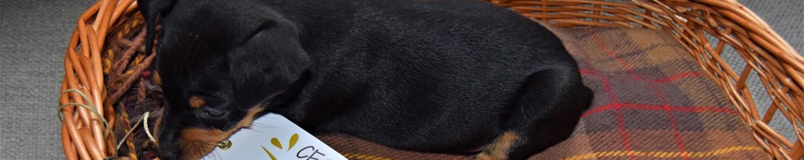 Cestas para perros y gatos: Una cesta de Cestas Home hará las delicias de tu mascota