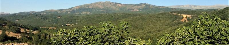 Cestas de castaño de Montemayor del Río. Las mejores ideas para guardar alimentos