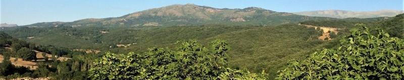 CESTAS DE CASTAÑO DE SALAMANCA. CESTAS DE CALIDAD AHORA A TU ALCANCE