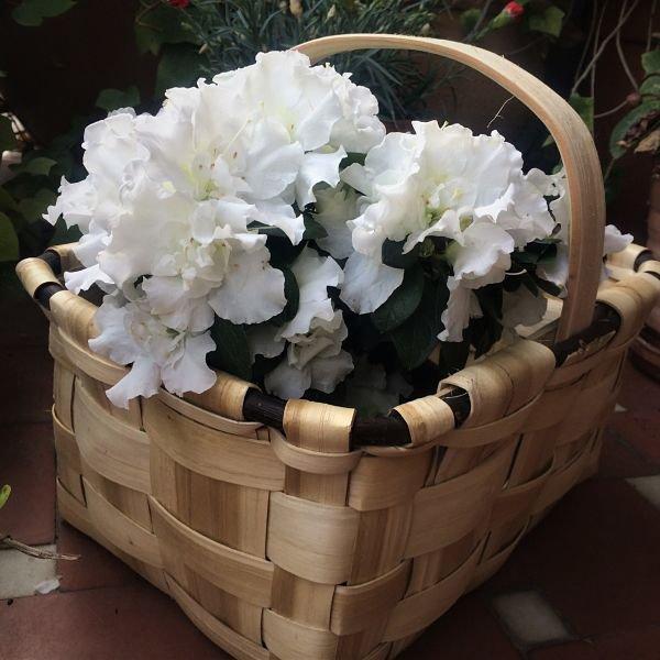 cesta de castaño con  asa plana
