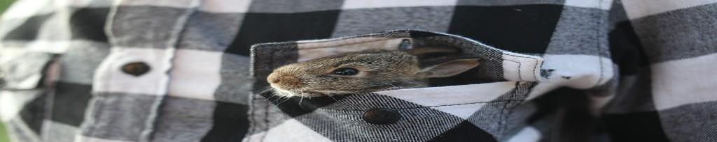 Expertos en piensos para conejos en Cantabria
