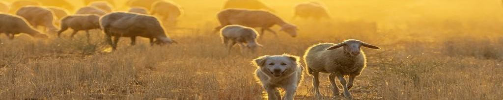 Alimentación para cabras y ovejas en Cantabria