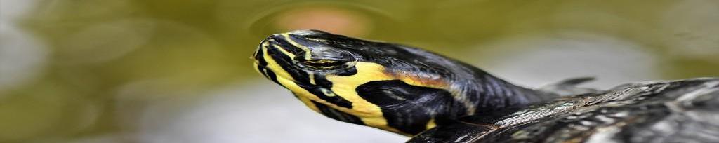 Comida natural para tortugas domésticas en Cantabria