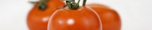 El cultivo del tomate en Cantabria
