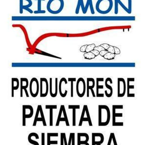 Patata de Siembra Certificada BARAKA Y/O AGRIA: Calibre 35/55. Saco 10 Kg. Sdad. Coop. Rio Mon. Burgos [2]