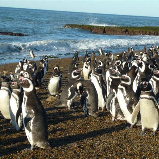 Argentina para armar - Paquete Puerto Madryn