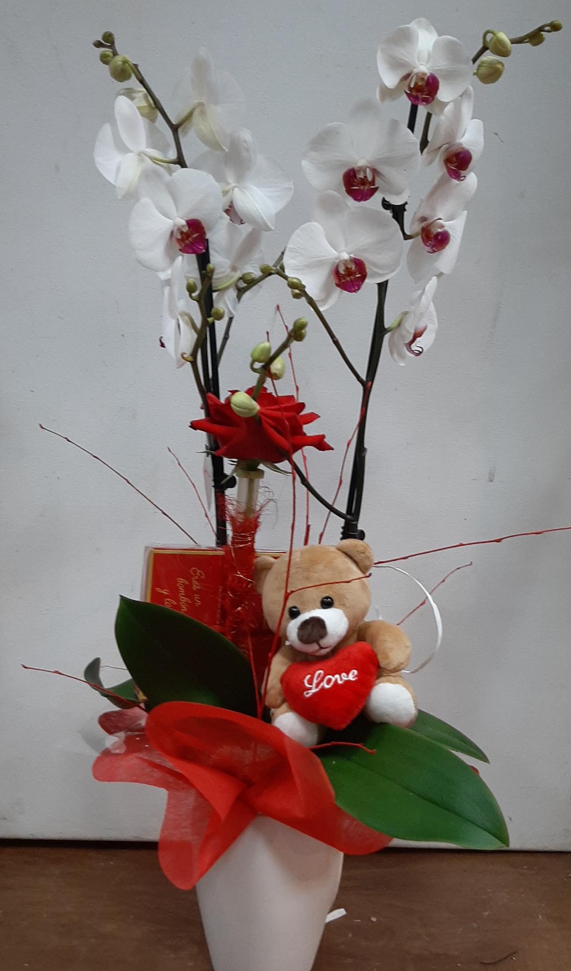 Orquídea de San Valentín, bombones, peluche y rosa roja decorada
