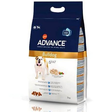 Advance  Bulldog Ingles Adult
