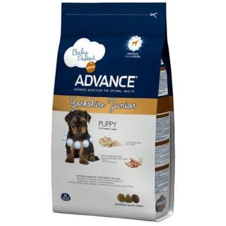 Advance Yorkshire Terrier Junior