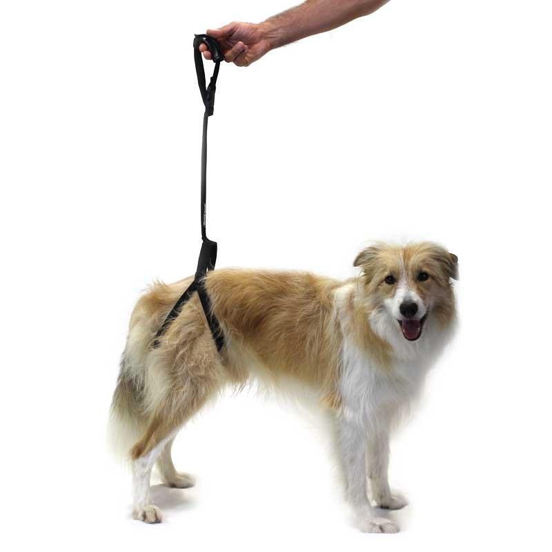 Arnés de Soporte para Perro