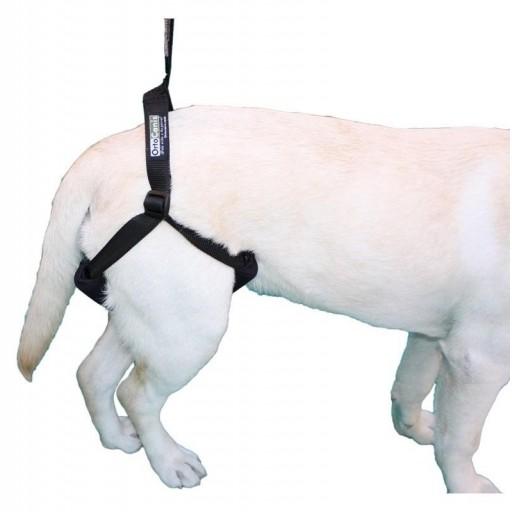 Arnés de Soporte para Perro [1]