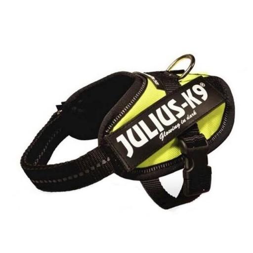 Julius K9  IDC Baby 1 Amarillo