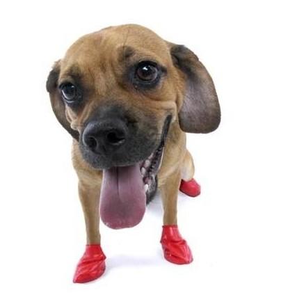 Botas para perro Pawz (caucho) [1]