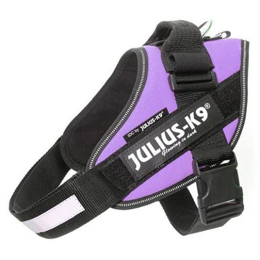 Julius K9 IDC 4 Púrpura
