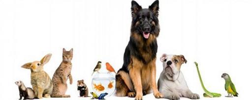 Mascotas y Animales